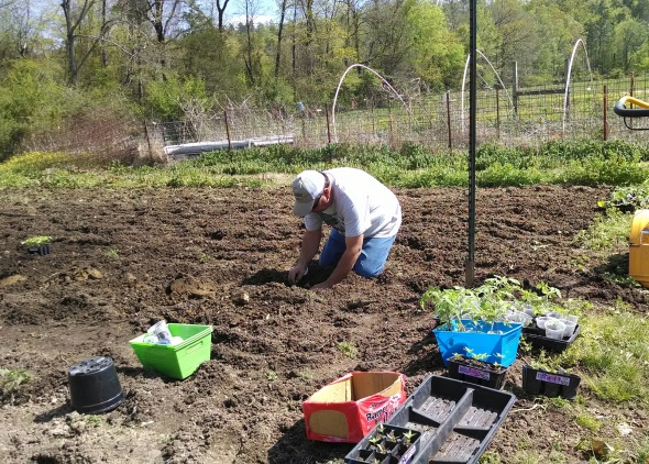 Farmer Rick planting peppers