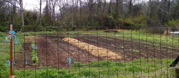 April 6th Garden