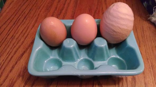 Egg Wow!