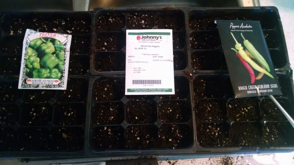 Pepper seeds started