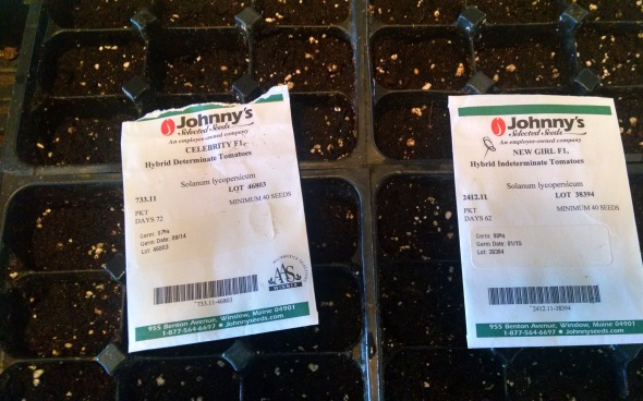 Tomato seeds started