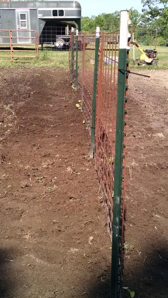 Pole green beans